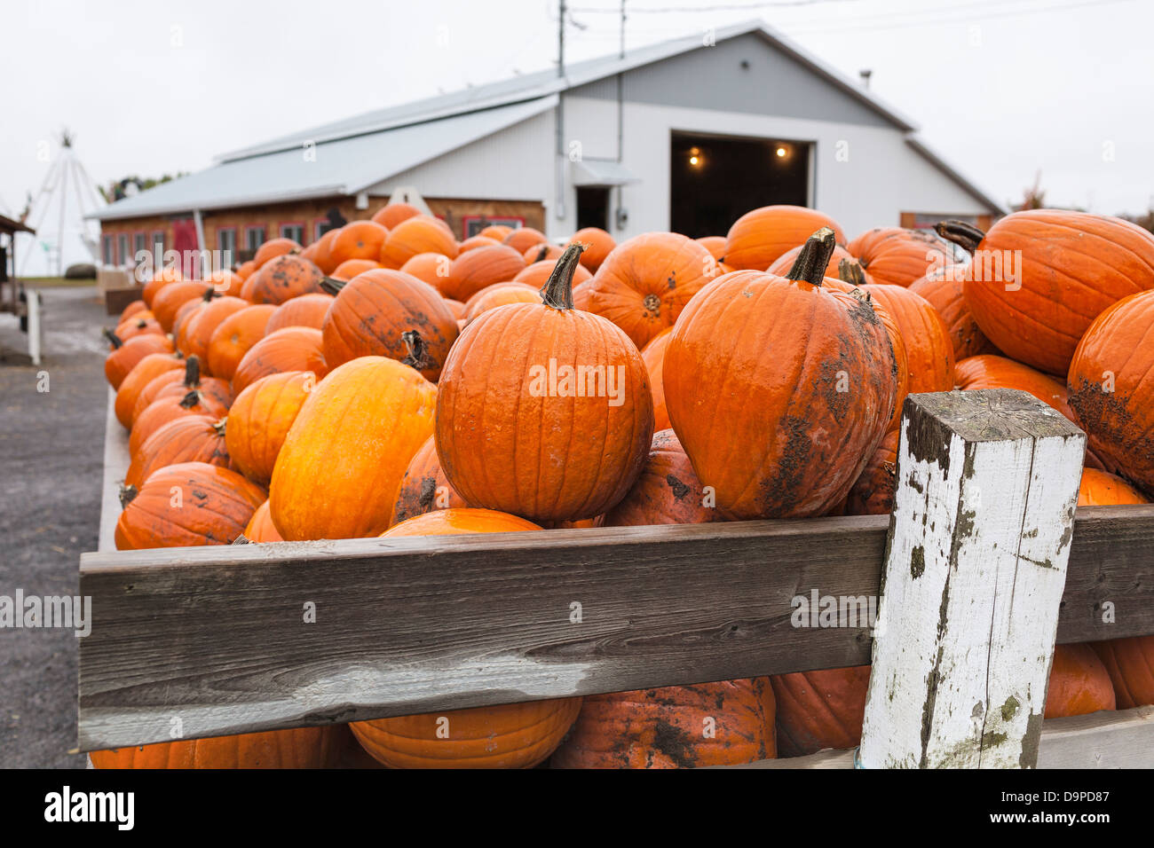 Pumpkins, Eastern Townships, Quebec, Canada - Stock Image