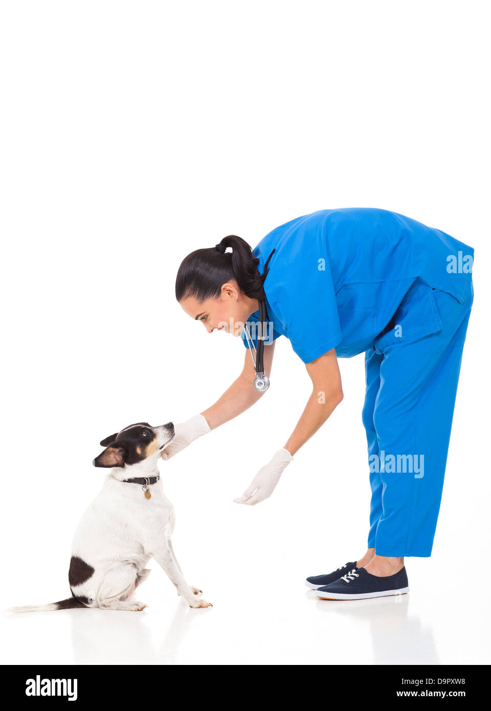 vet doctor playing with dog isolated on white background - Stock Image