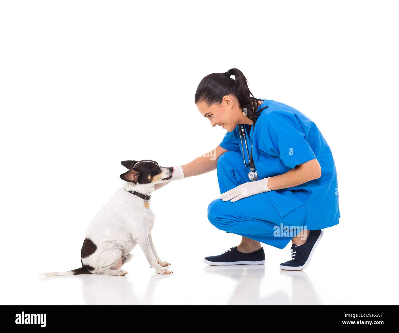 veterinarian female doctor playing with pet dog - Stock Image