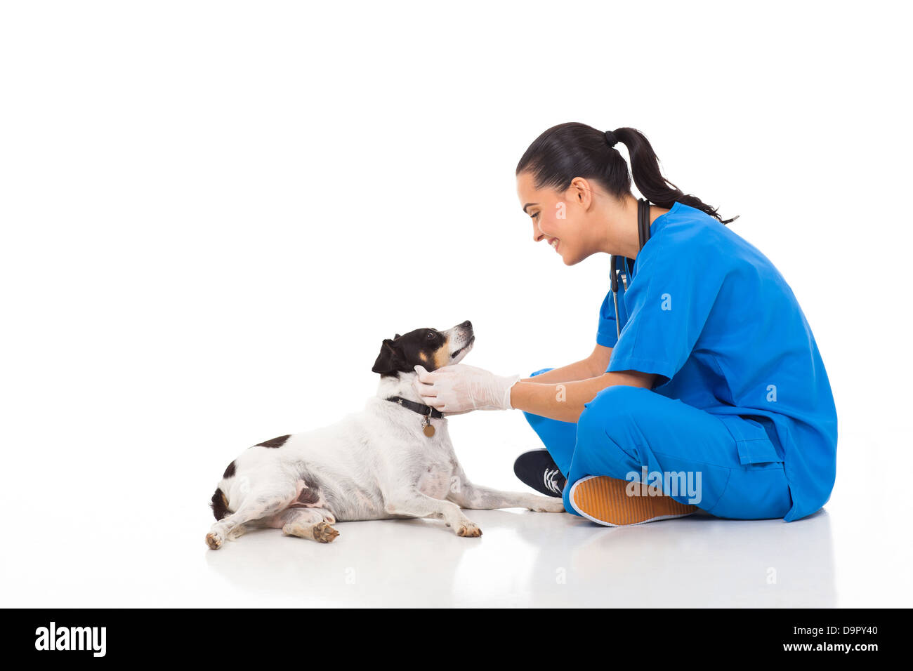 professional vet doctor playing with pet dog isolated on white - Stock Image
