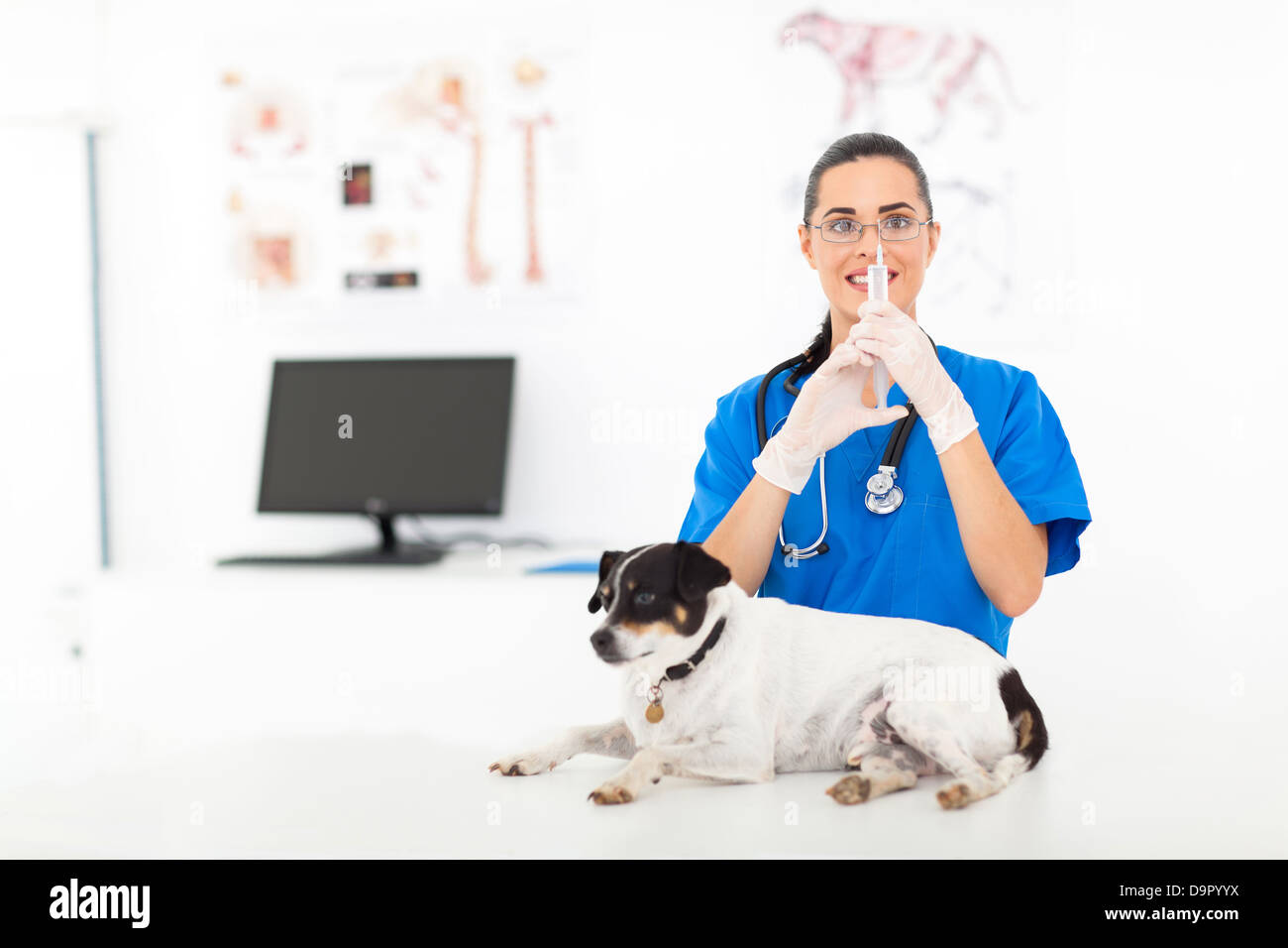 beautiful female vet preparing injection to sick pet dog - Stock Image