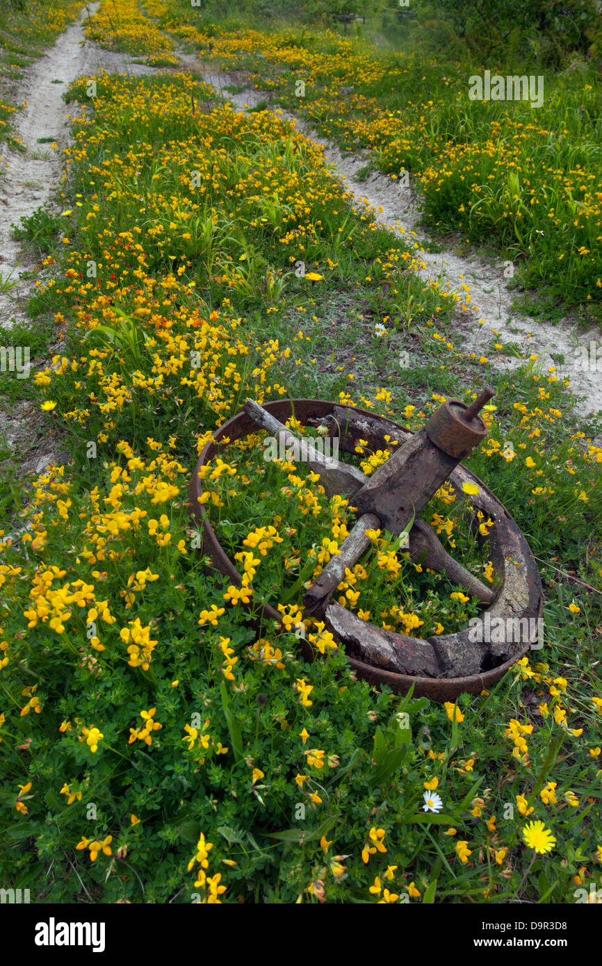 Old implement wheel left in field Chilterns - Stock Image