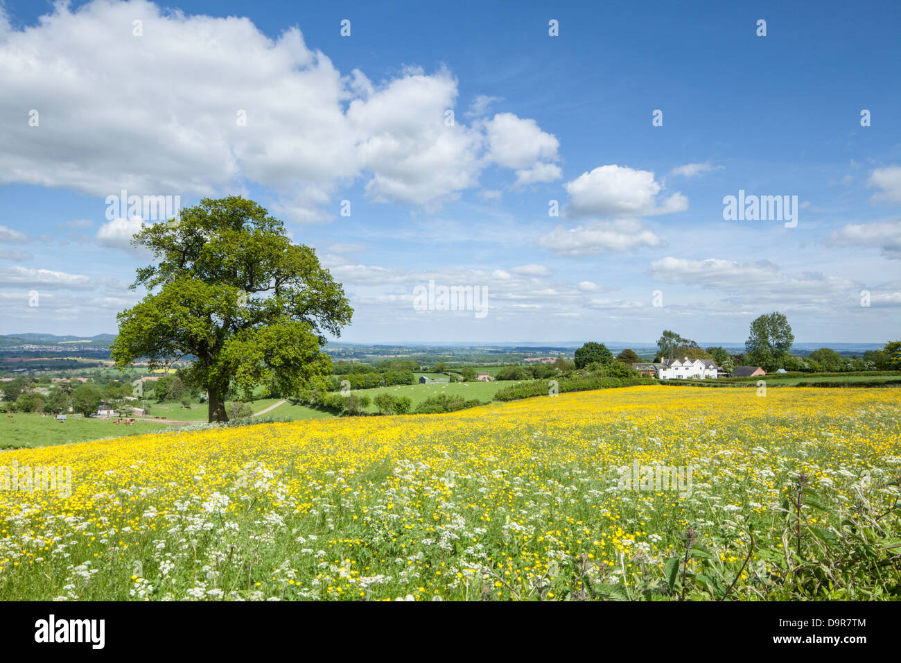 A view across wildflower meadows from the Marcle Ridge near Much Marcle, Herefordshire, England, UK Stock Photo
