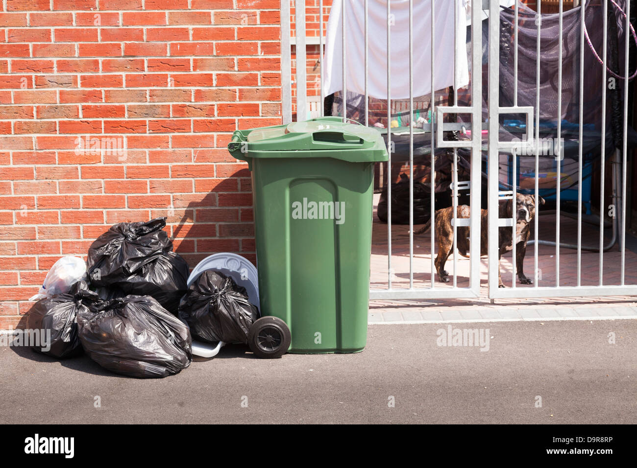 rubbish sacks and wheelie bin with metal gates and Staffordshire Bull Terrier type dog - Stock Image