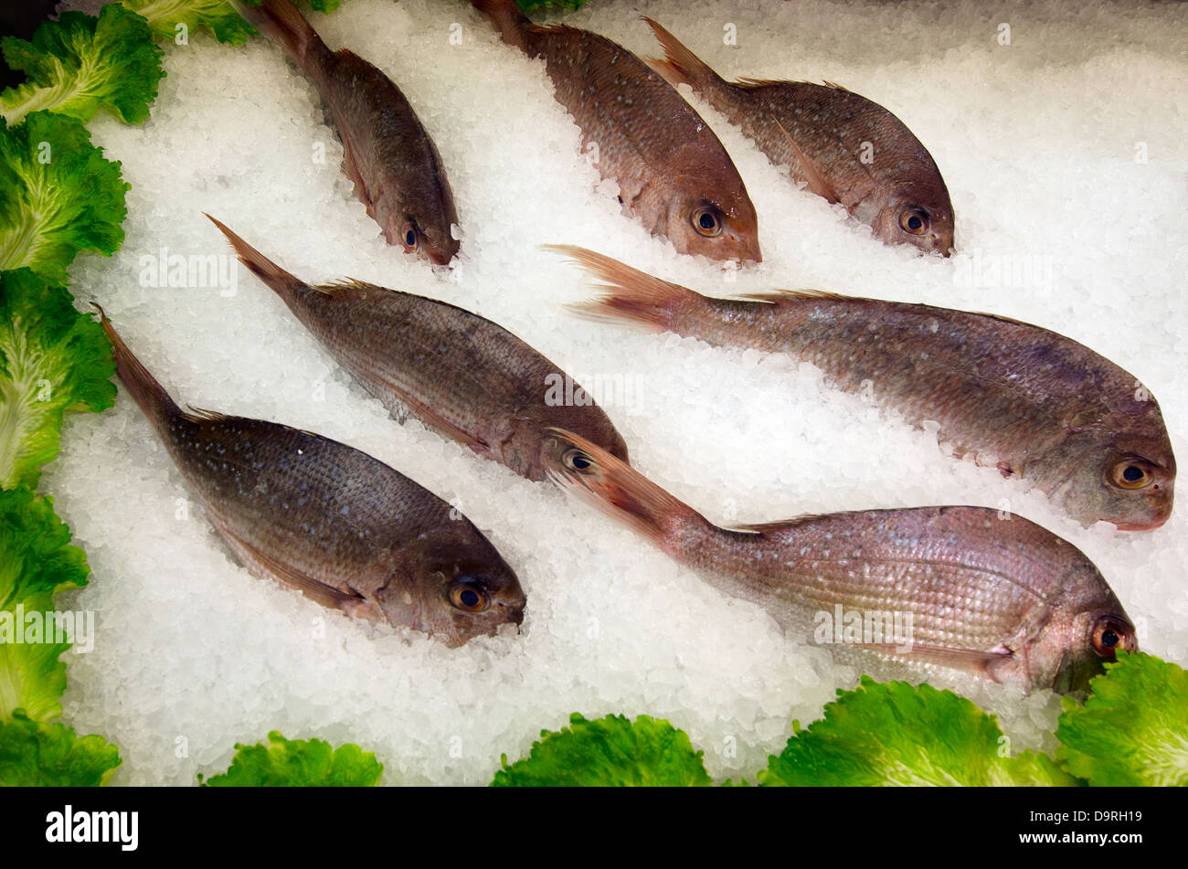 Fresh Snapper fish in ice on display in farmers market. Stock Photo
