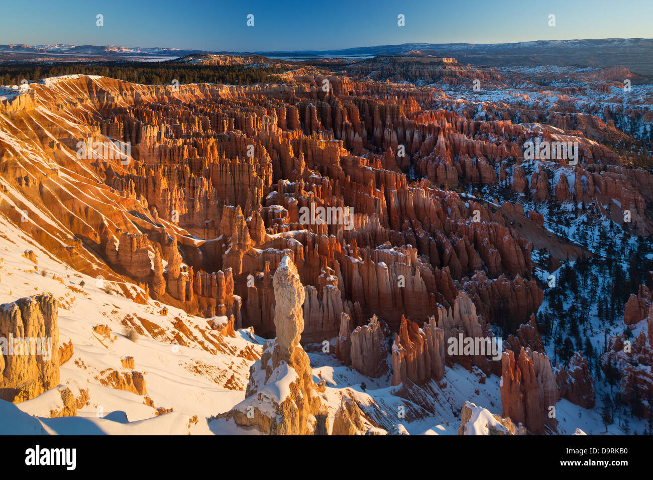 the hoodoos in the Amphitheatre of Bryce Canyon at dawn, Utah, USA Stock Photo