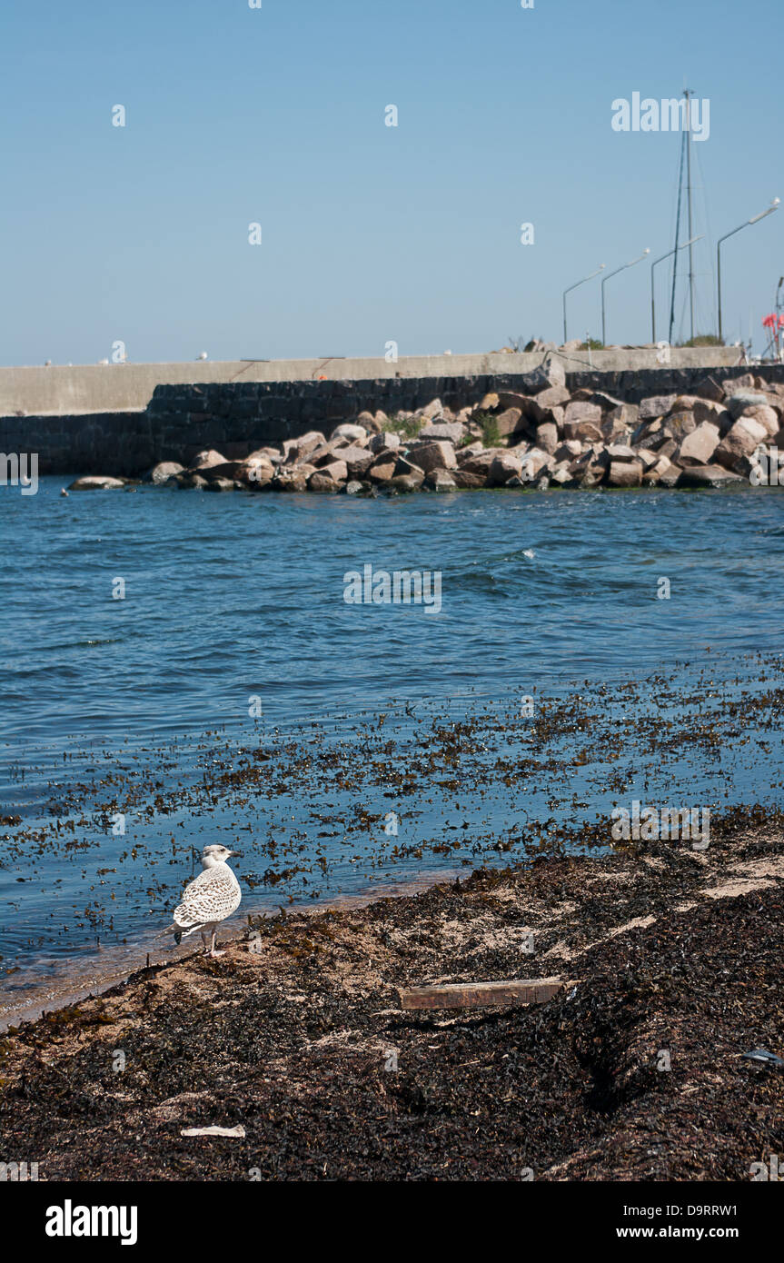 Dirty beach in the harbor. - Stock Image
