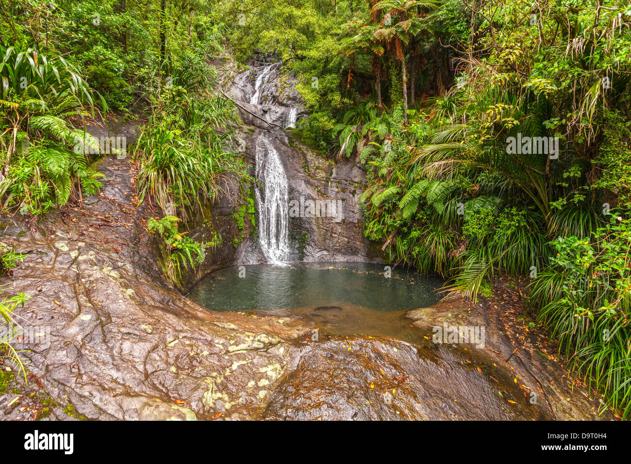 Fairy Falls, in the Waitakere Ranges Regional Park, Auckland Region, New Zealand - Stock Image