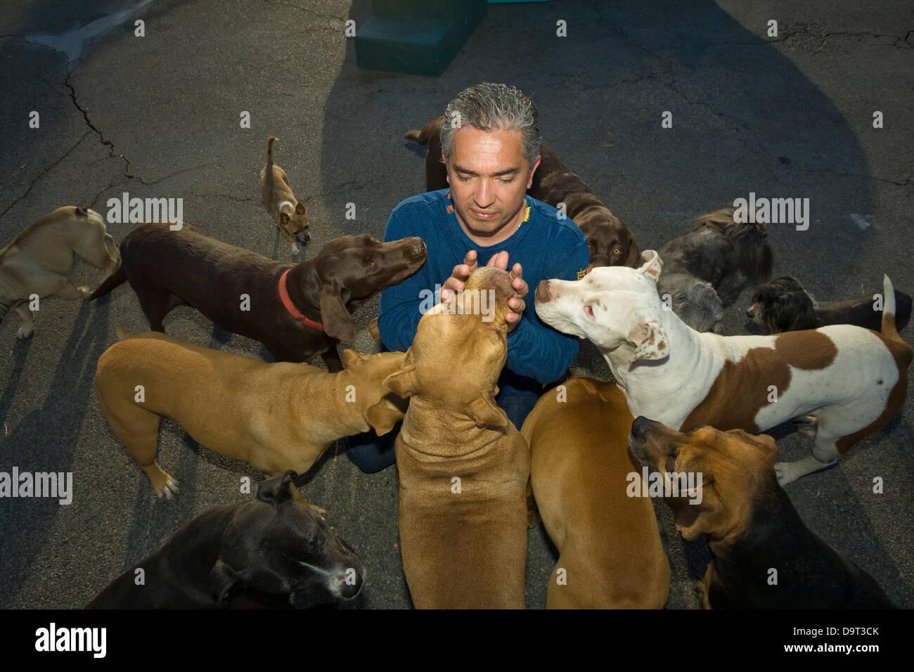 Cesar Millan Best Dog Breed