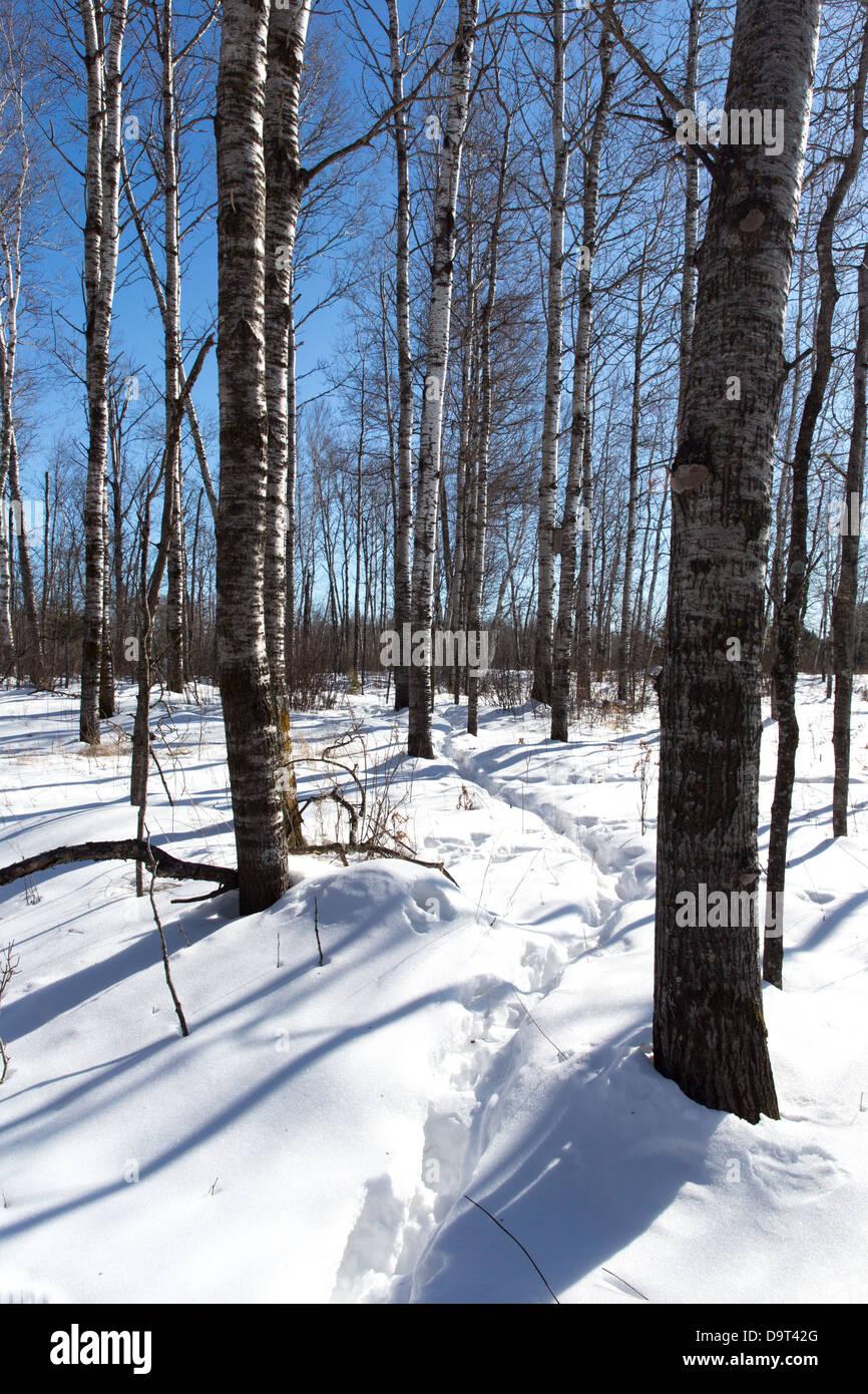 Animal trail through the snow - Stock Image