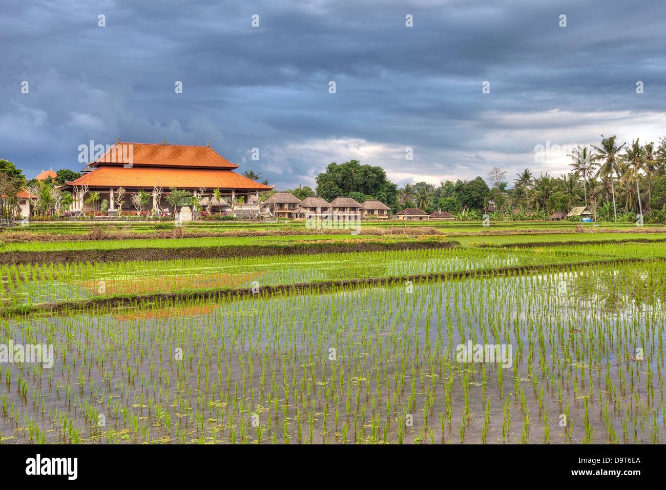 Ubud nature - Stock Image