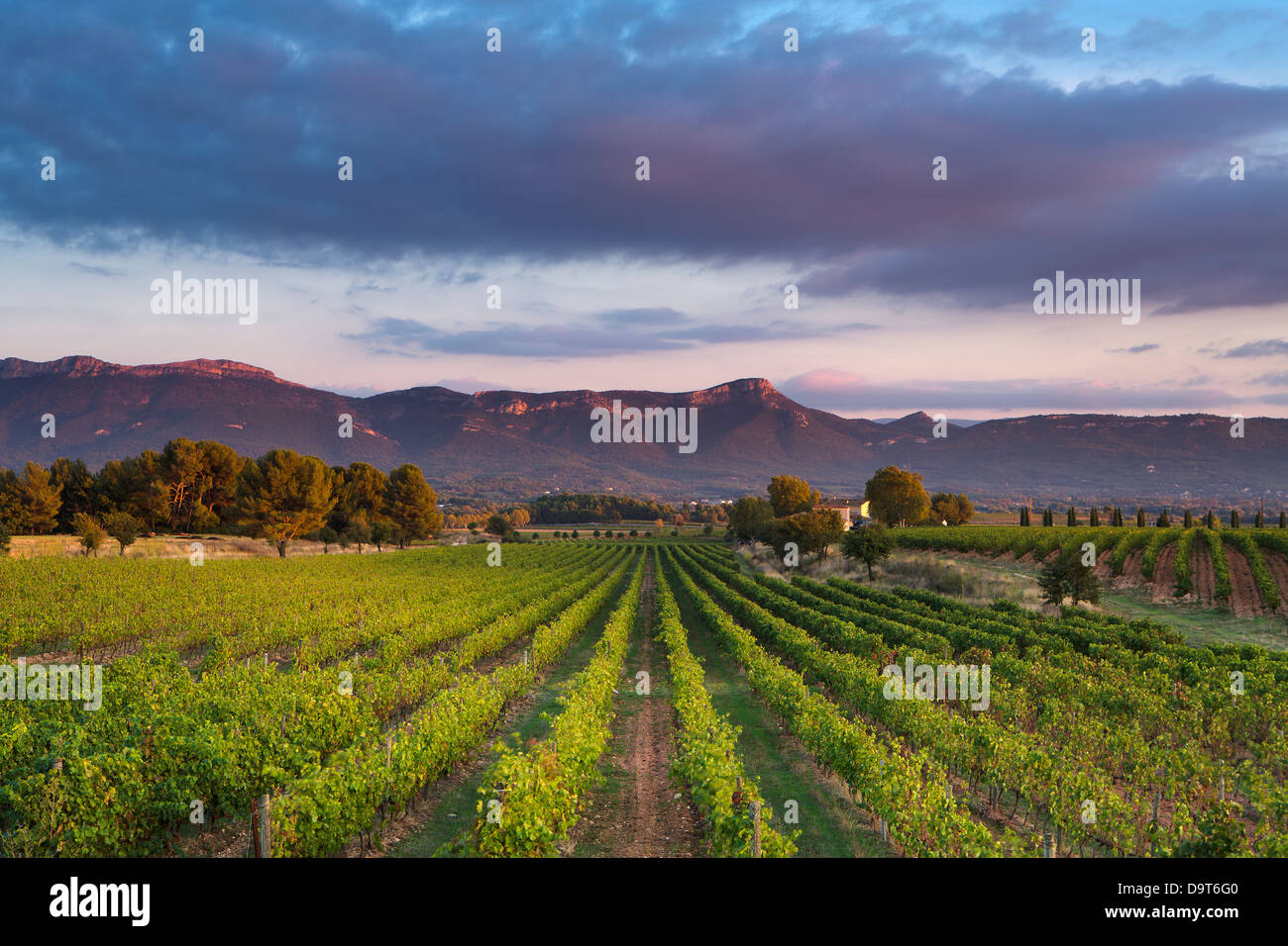 a vineyard nr Puyloubier with the Massif de la Ste Baume at dusk, Var, Provence, France - Stock Image