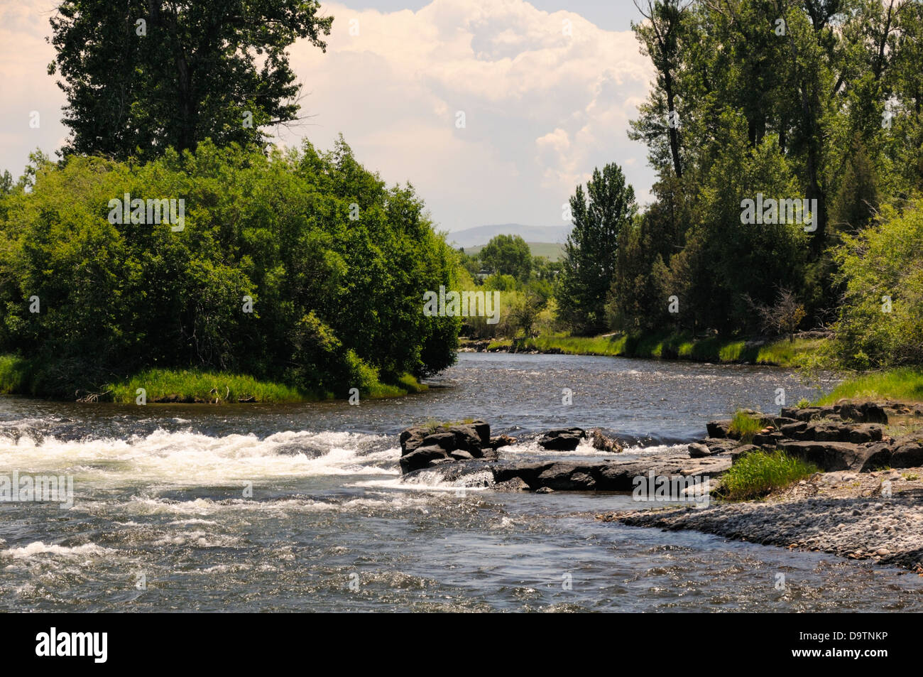River Greenery and Rocky Riverbank - Stock Image