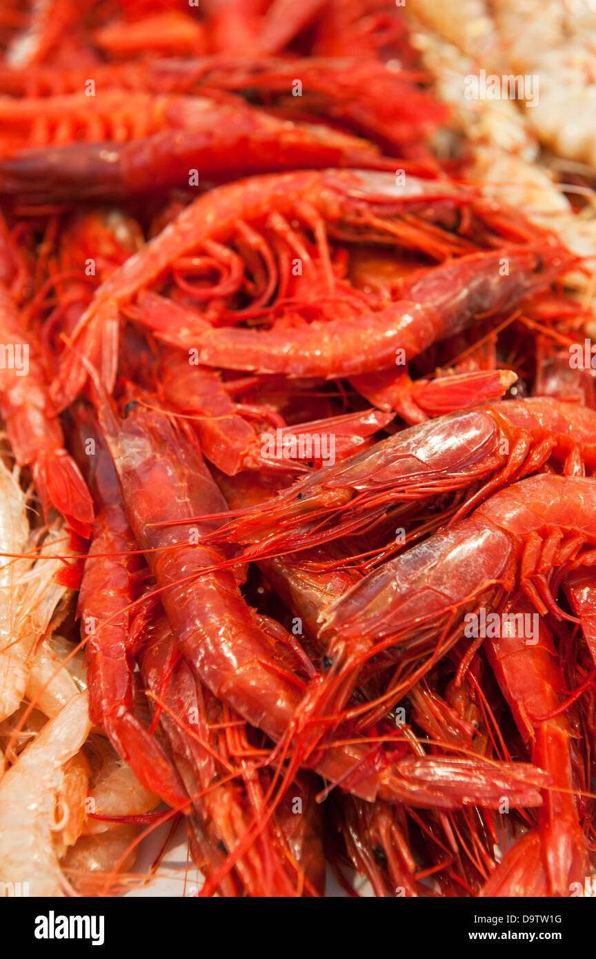 Big Red Lobster Stock Photos Big Red Lobster Stock Images Alamy