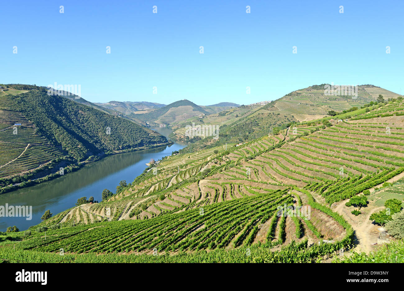 vineyard Douro upper valley Portugal - Stock Image