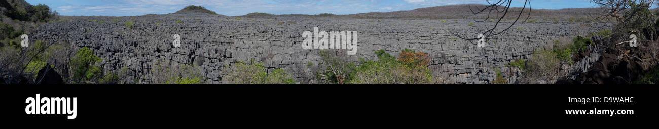 Panoramic View 103 X 13 Inches Bizarre Razor Sharp Limestone Pinnacles Known As Tsingy At Ankarana Reserve In Northern - Stock Image
