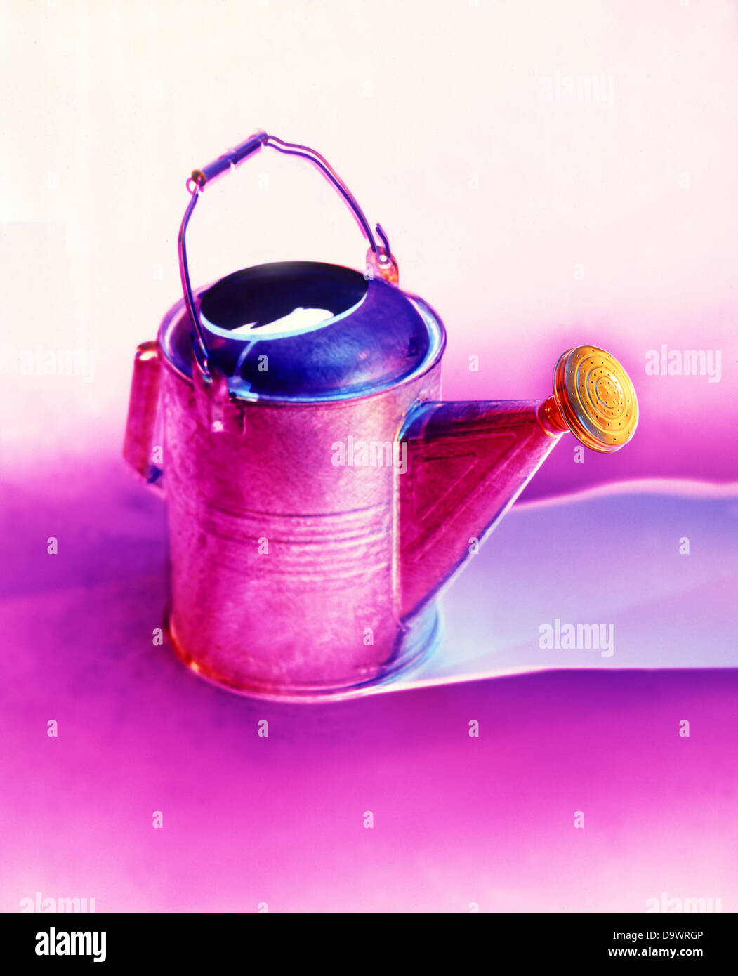 pink watering can - Stock Image