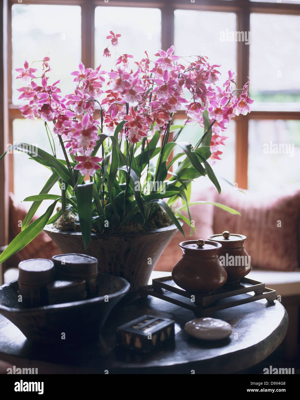 Pot of pint orchids on table with rustic artefacts in country sitting room - Stock Image