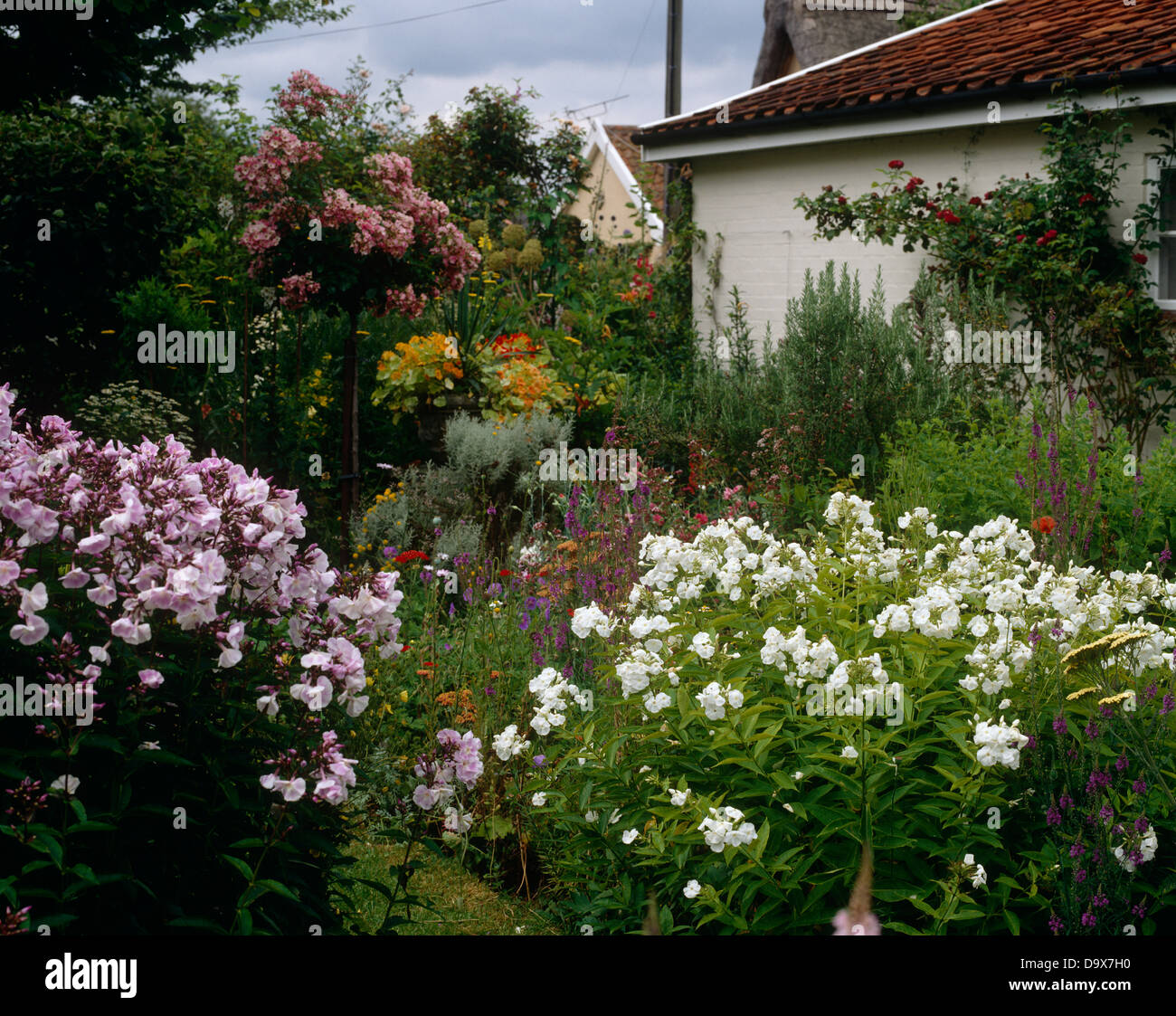 English Cottage Garden With Pink And White Phlox In Borders In