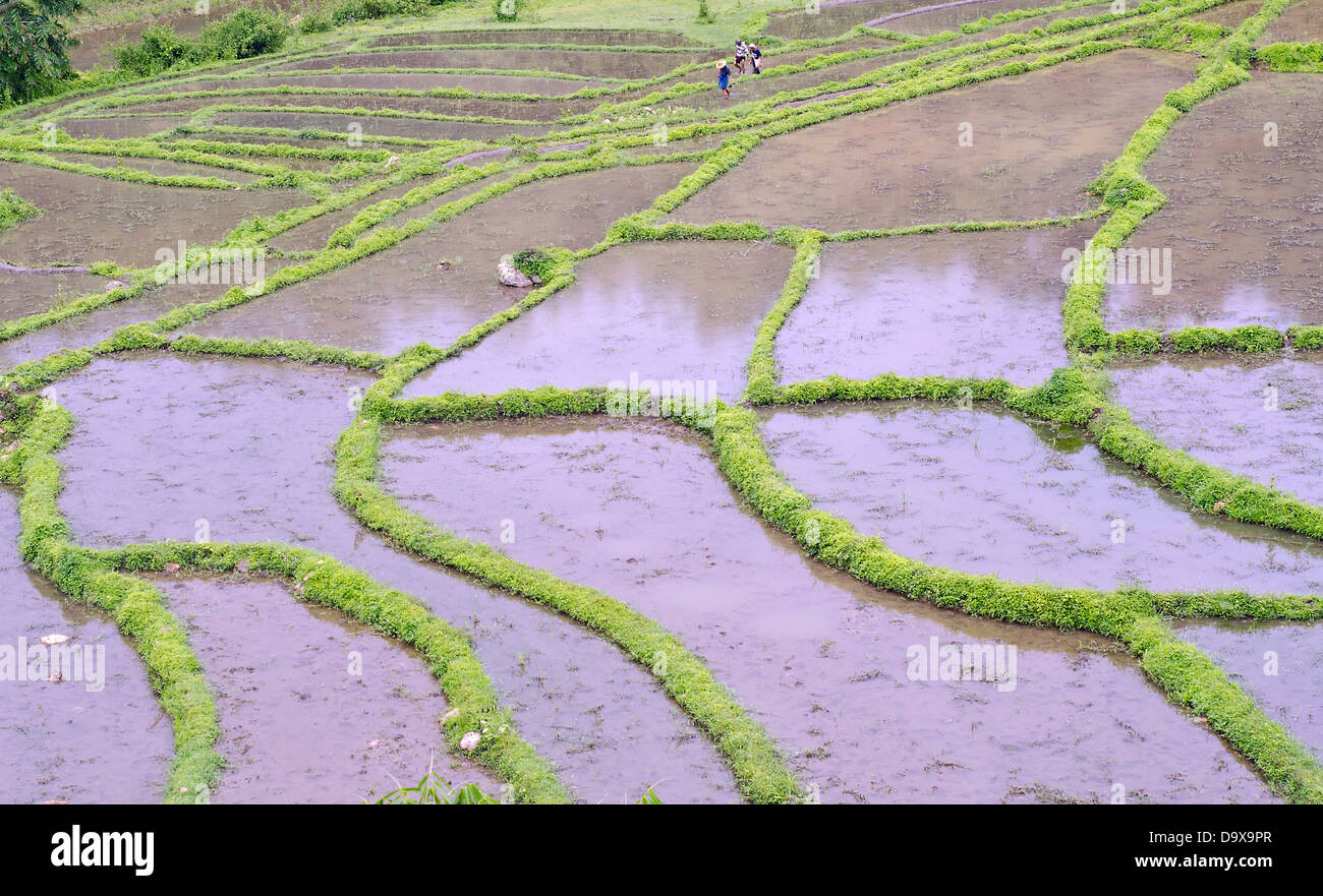 Rice terraces,Namhsan country side, northern Shan ,Burma - Stock Image