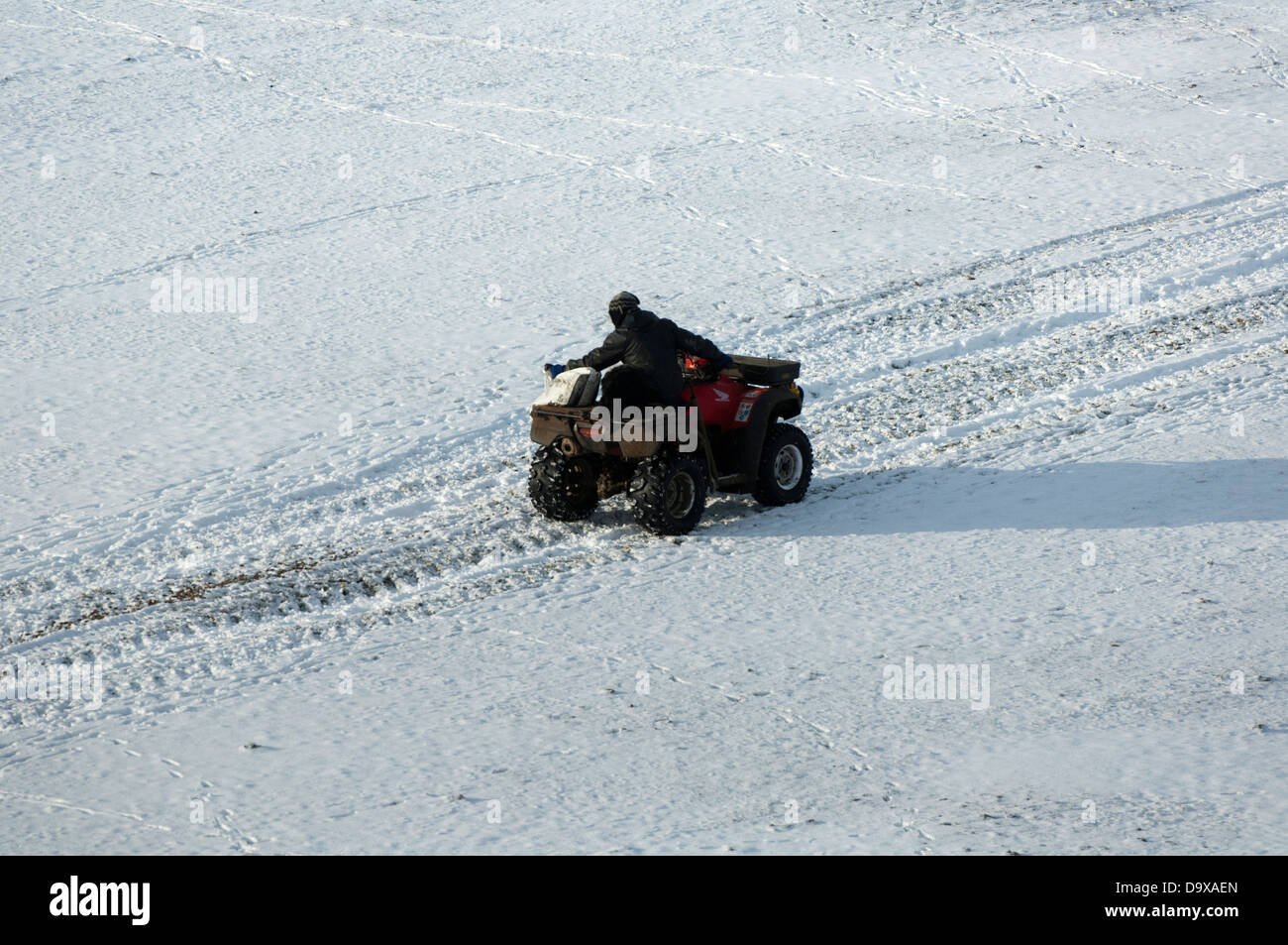 Farmer on quad ATV bike pouring feed out for sheep in snow, North Yorkshire. - Stock Image