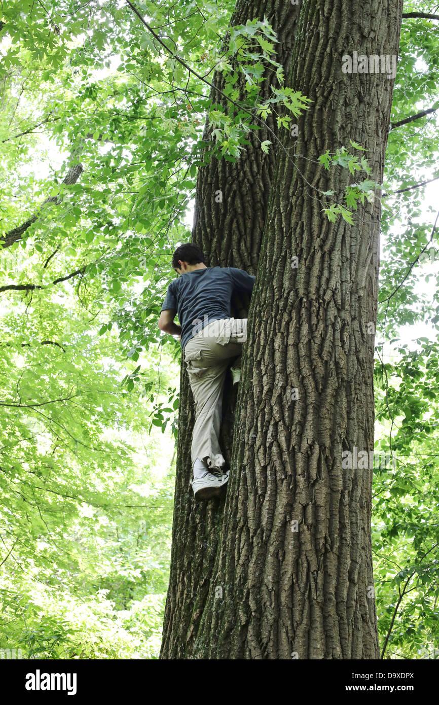 A boy climbing a tree. - Stock Image