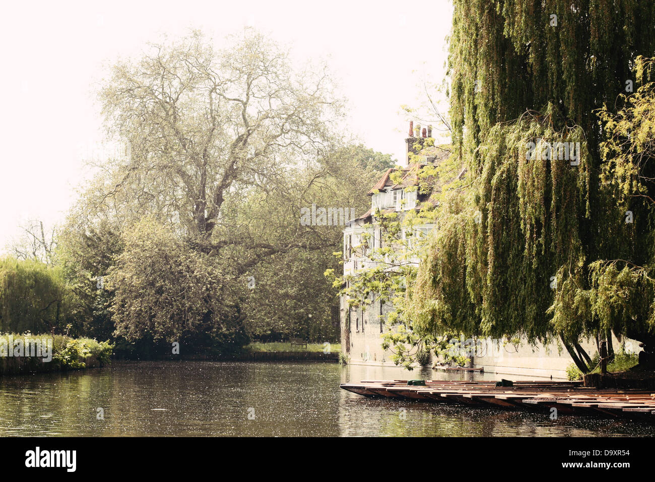 Pollen drifts over some punts and a weeping willow tree on the River Cam in Cambridge. - Stock Image