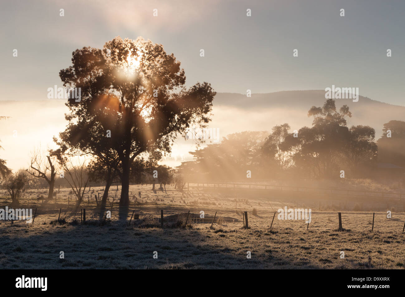 The sun rises on a cold winter's morning in the Yarra Valley, Victoria, Australia - Stock Image