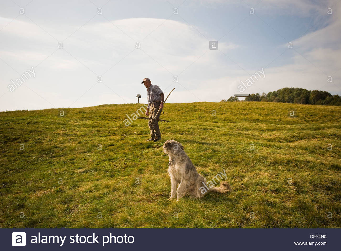 Farmer and cattle breeder,Taleggio valley,Lombardy,Italy - Stock Image