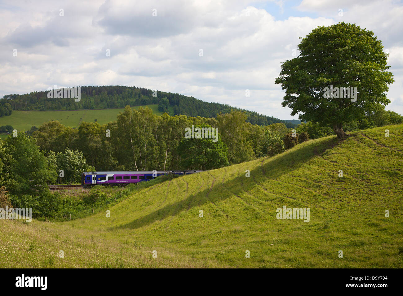Rolling hill with tree and sprinter train on the Settle to Carlisle Line, Eden Valley, Cumbria, England, UK - Stock Image