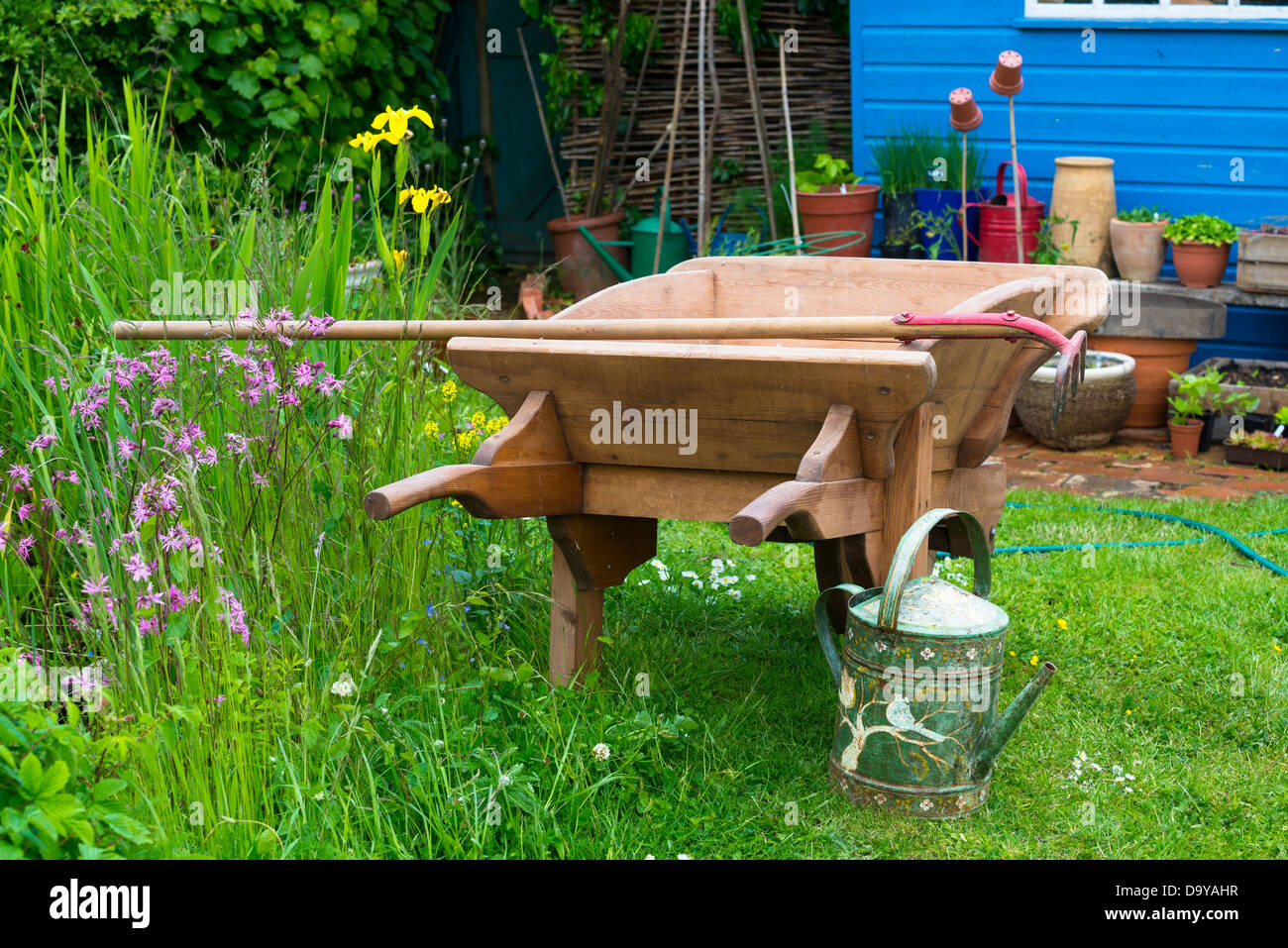 Country garden scene with wooden wheelbarrow, blue potting shed and wildlife area to the left, Norfolk, England, - Stock Image