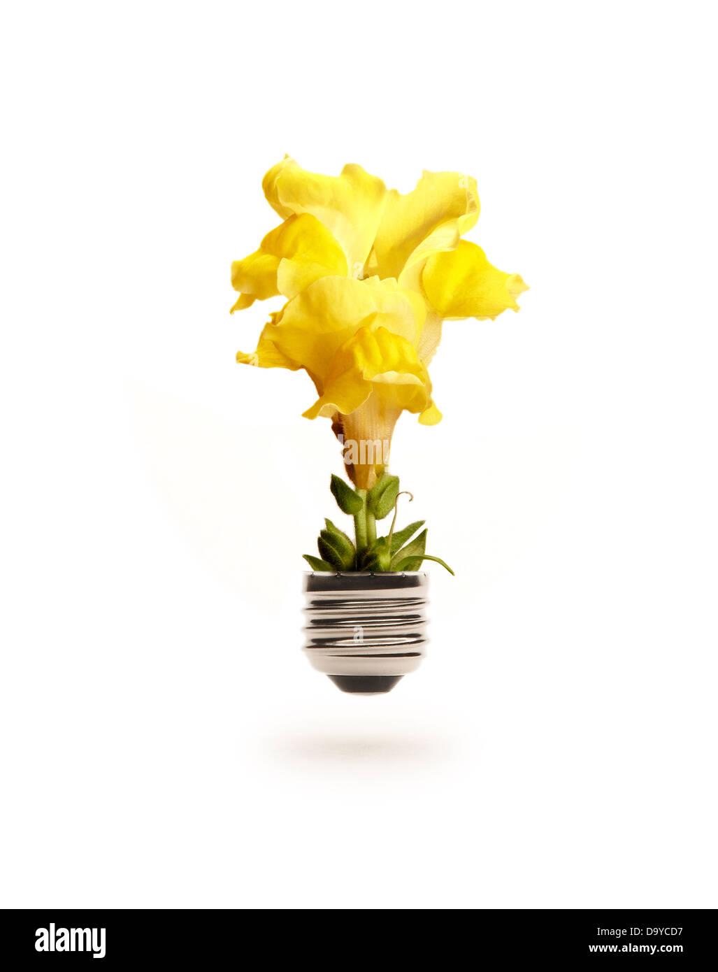 Flower Light Bulb - Stock Image