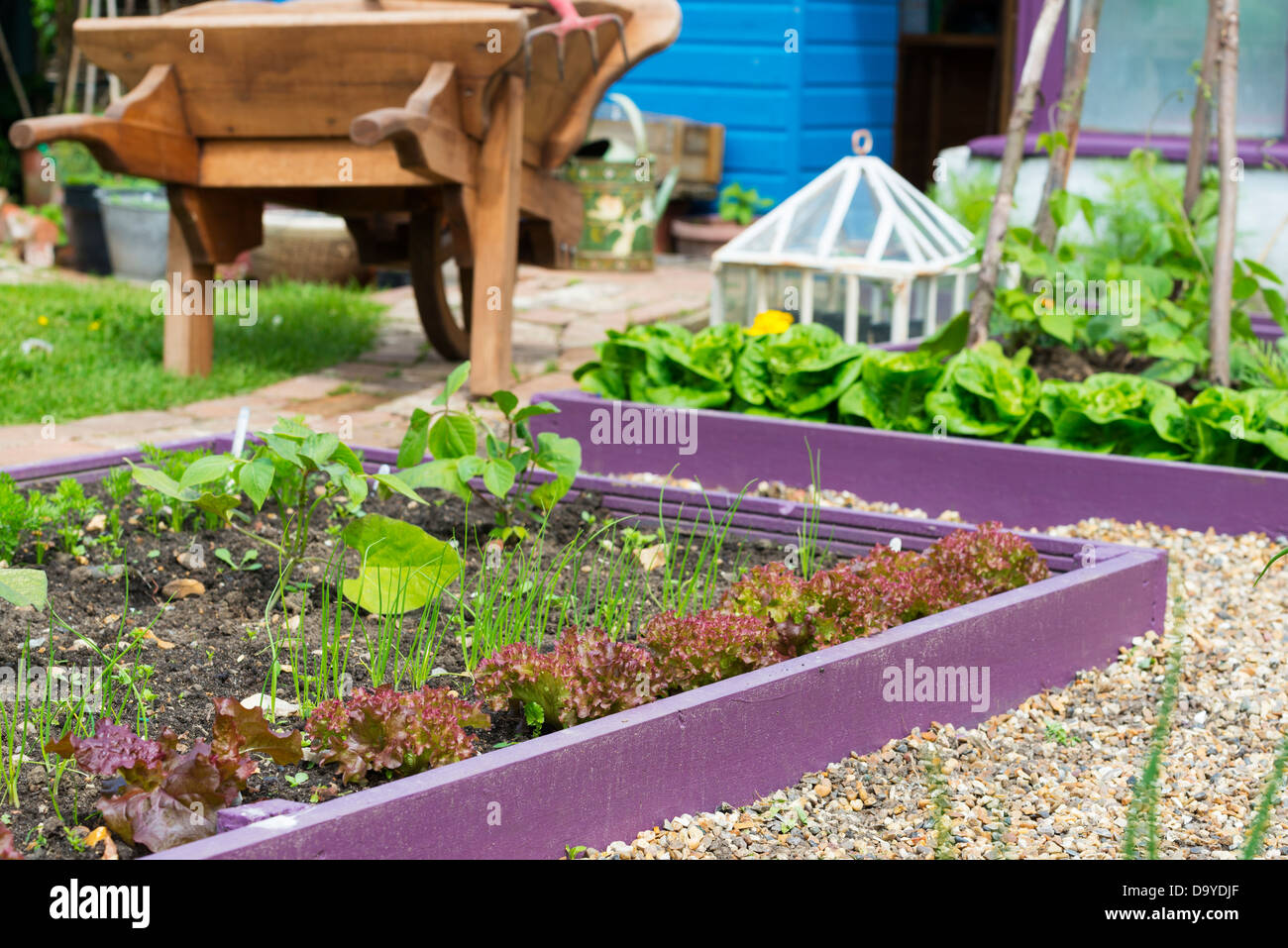 Early Summer Garden With Brightly Painted Raised Beds With Shingle Stock Photo Alamy