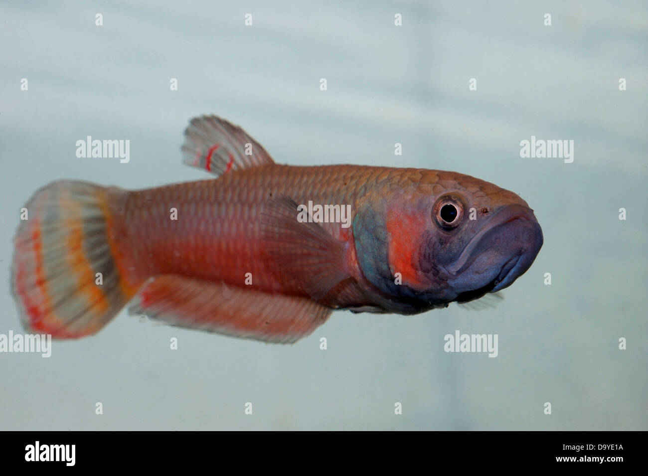 Freswater Fish Stock Photos & Freswater Fish Stock Images - Alamy