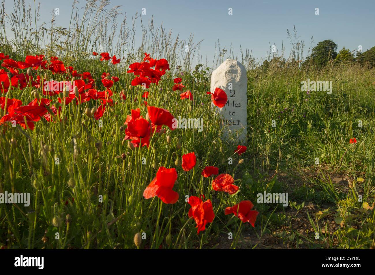 Poppies surrounding an old roadside milestone. - Stock Image