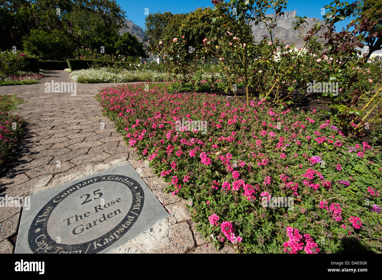 Rose Garden, The Company's Garden, Cape Town, South Africa - Stock Image