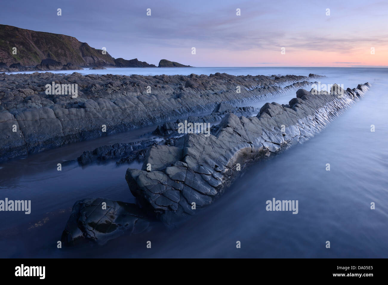 A section of rock shaped like a prehistoric crocodile on Welcombe Mouth Beach, North Devon, UK. Stock Photo
