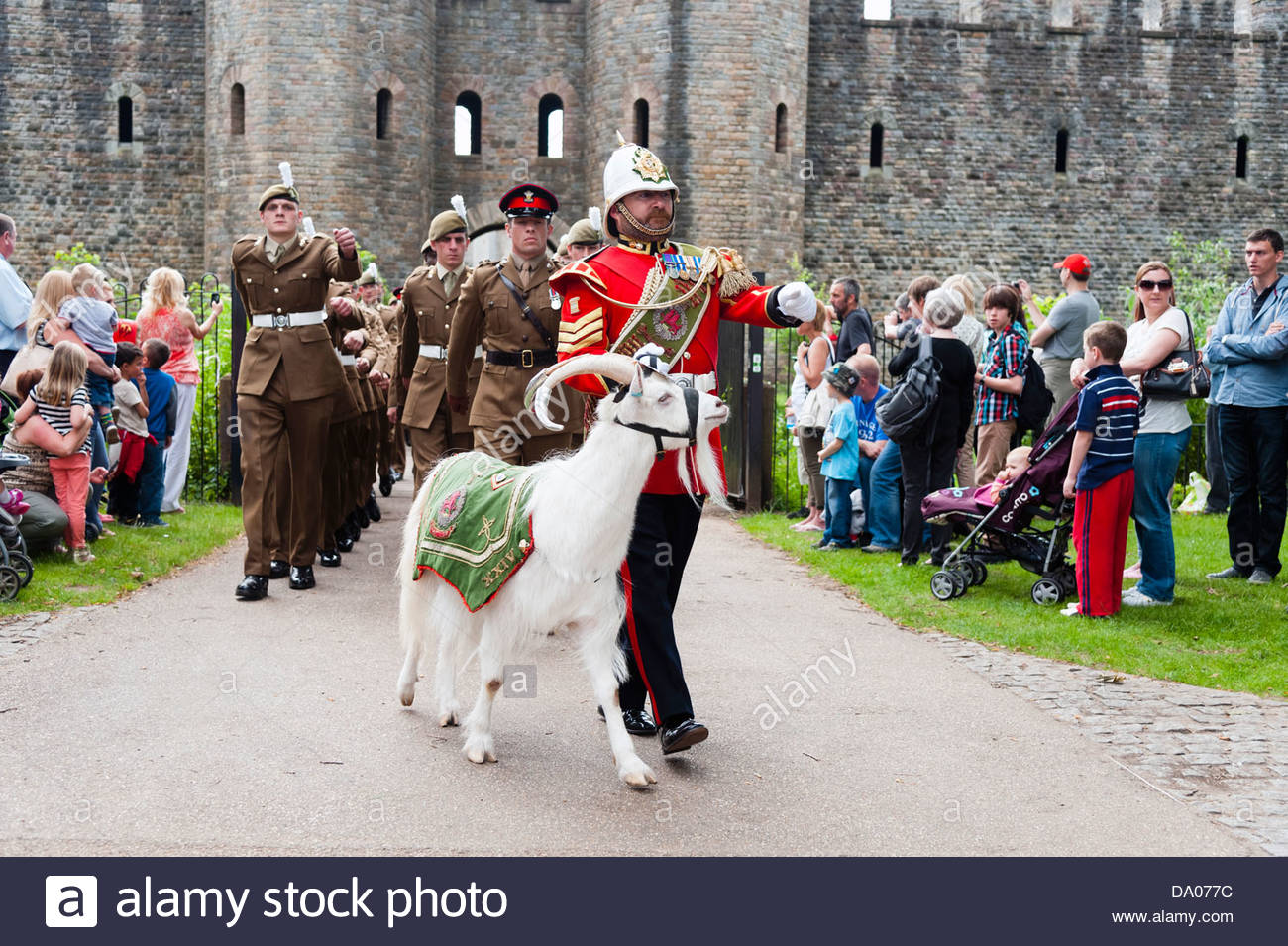 Armed Forces Day 2013 at Cardiff, Wales, UK. 2nd Battalion mascot white goat marching out of Cardiff Castle. - Stock Image