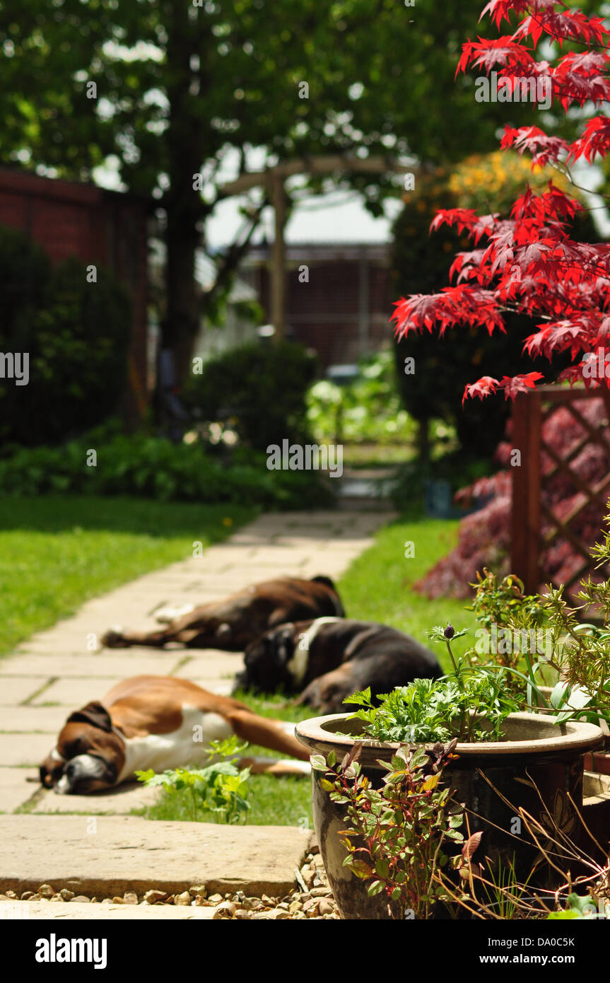 Let sleeping dogs lie - Stock Image