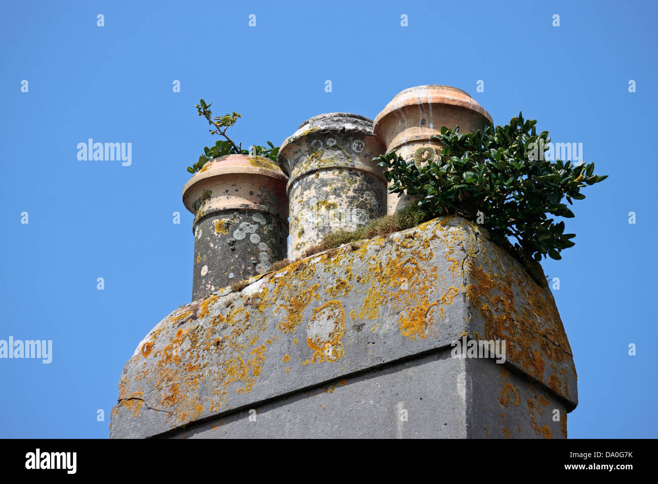 Chimney Pots with various lichens mosses and plants growing on them - Stock Image