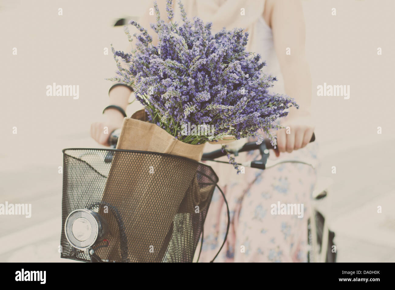 Women riding bike with lavender bouquet in basket - Stock Image