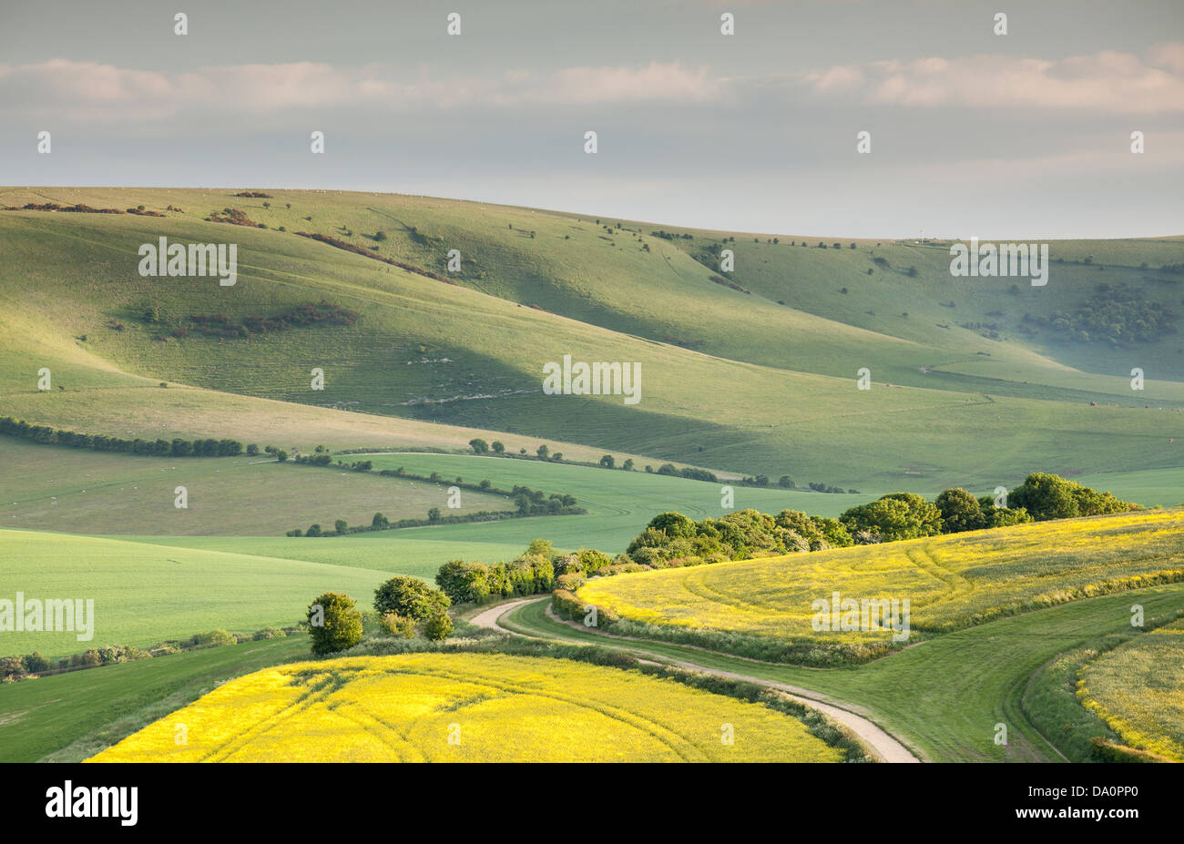 The undulating hills of the South Downs National Park - Stock Image