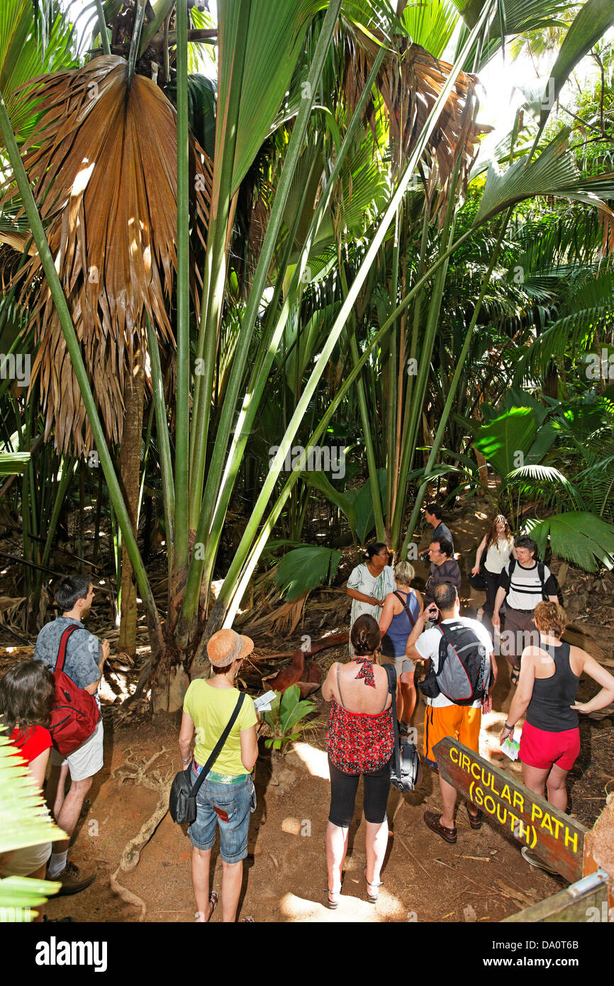 Guided tour at Vallee de Mai Nature Reserve, home of Coco de Mer , Praslin, Seychelles - Stock Image