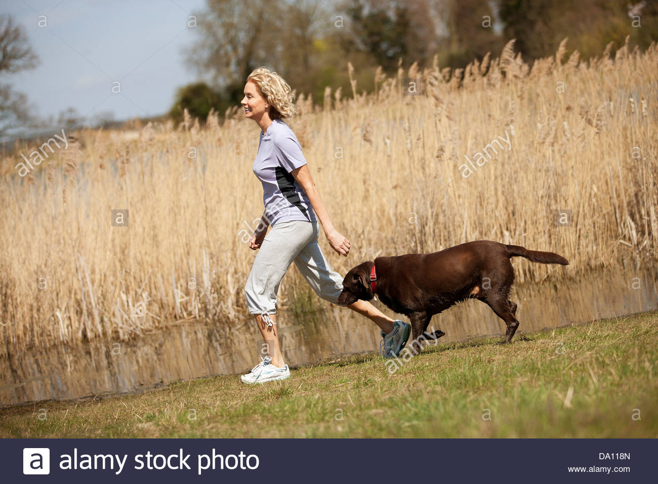 A mature woman walking in the countryside with her dog - Stock Image