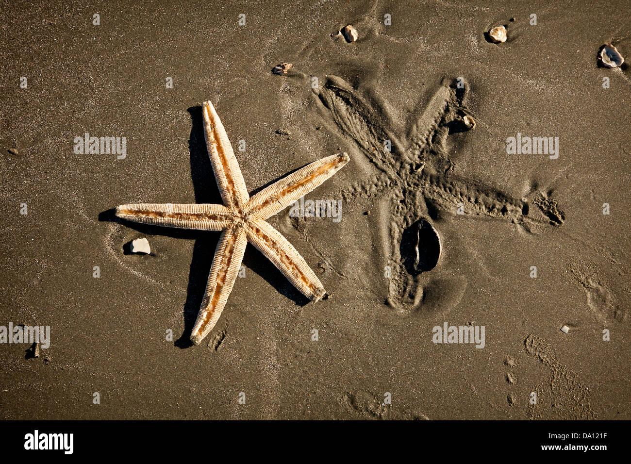 Starfish on the beach Charleston, SC - Stock Image