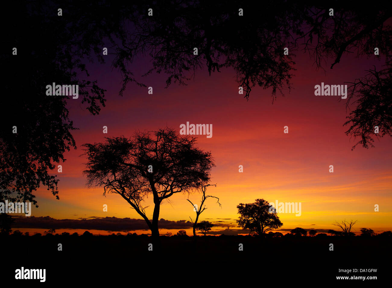 Sunset from Ngweshla Camp, Hwange National Park, Zimbabwe, Southern Africa - Stock Image