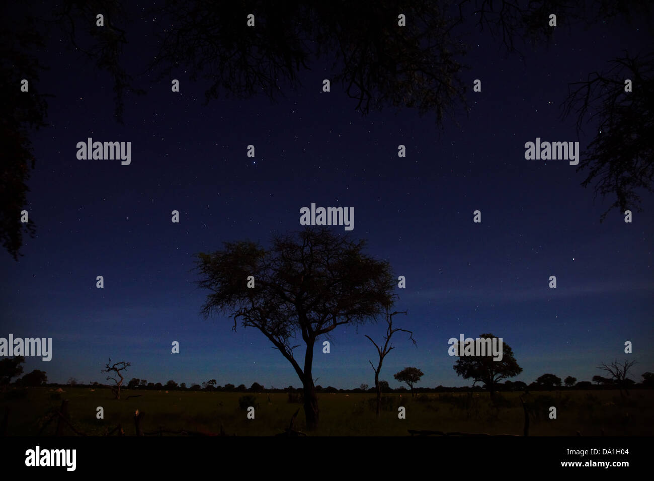 Night sky viewed from Ngweshla Camp, Hwange National Park, Zimbabwe, Southern Africa - Stock Image