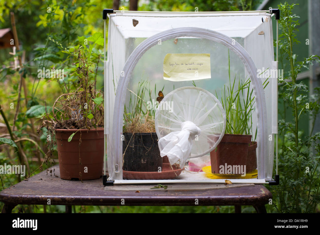 Breeding butterfly cage. - Stock Image