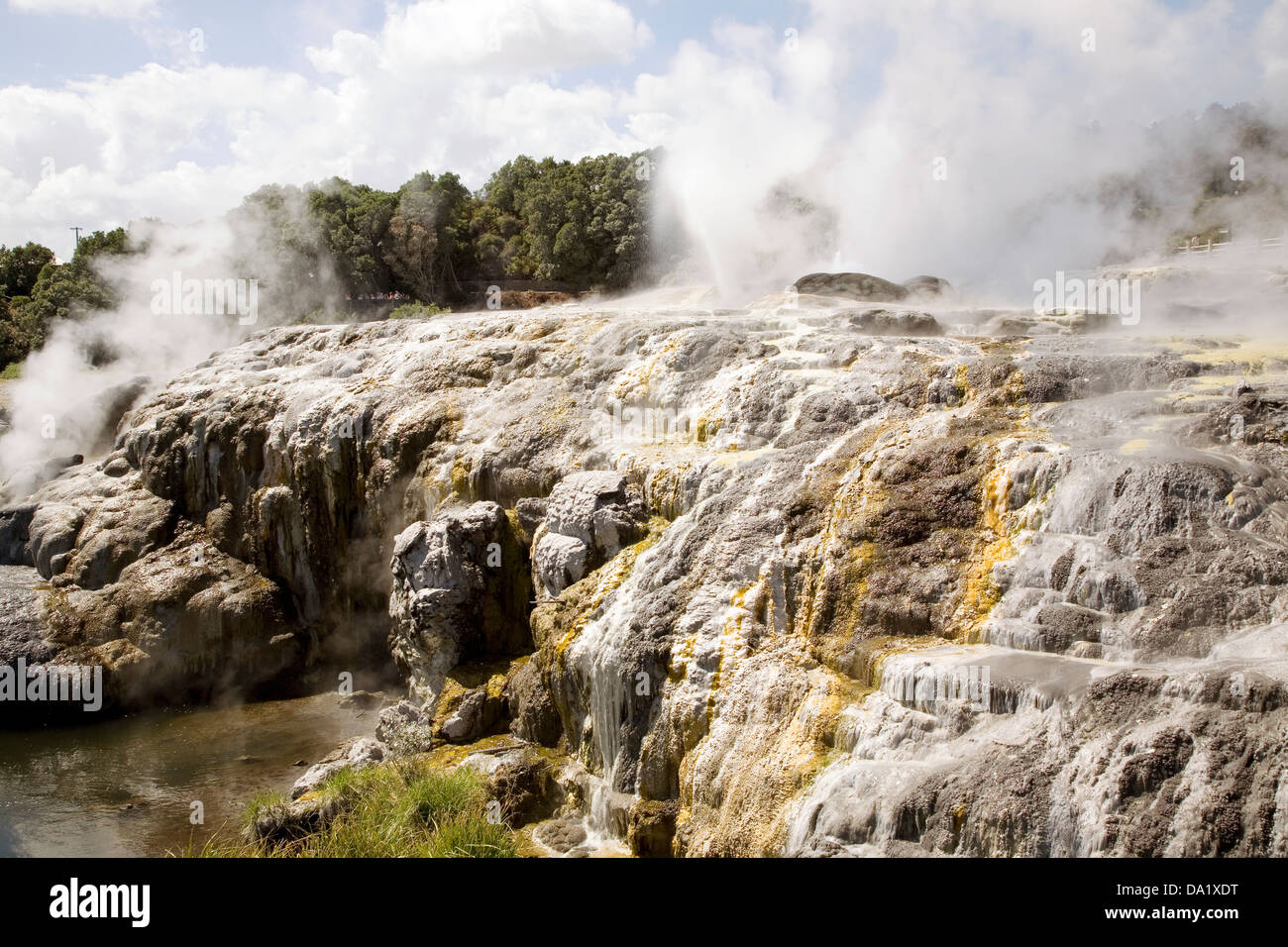 Pohutu Geyser erupts in a cyclic manner once or twice an hour, Rotorua, New Zealand. - Stock Image