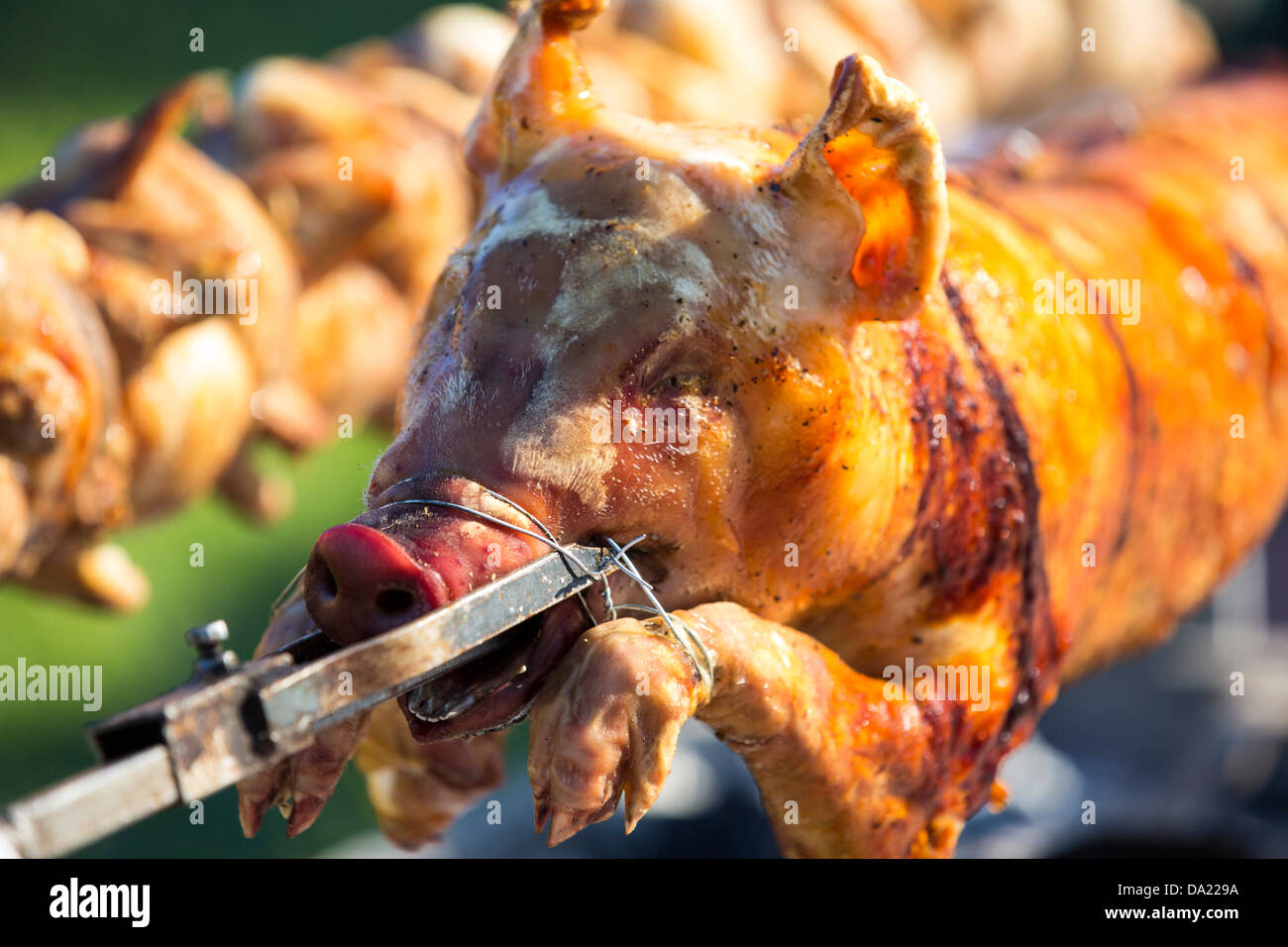 A hog roast and chickens roasting over a charcoal barbeque. - Stock Image